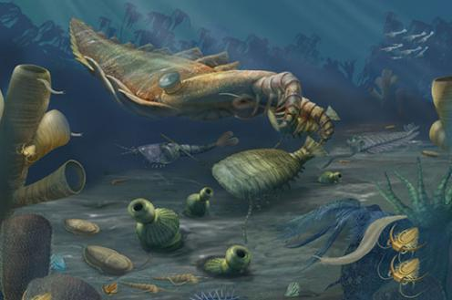 Illustration of animals near the ocean floor 510 million years ago. A large squid-like creature hovers over smaller organisms.
