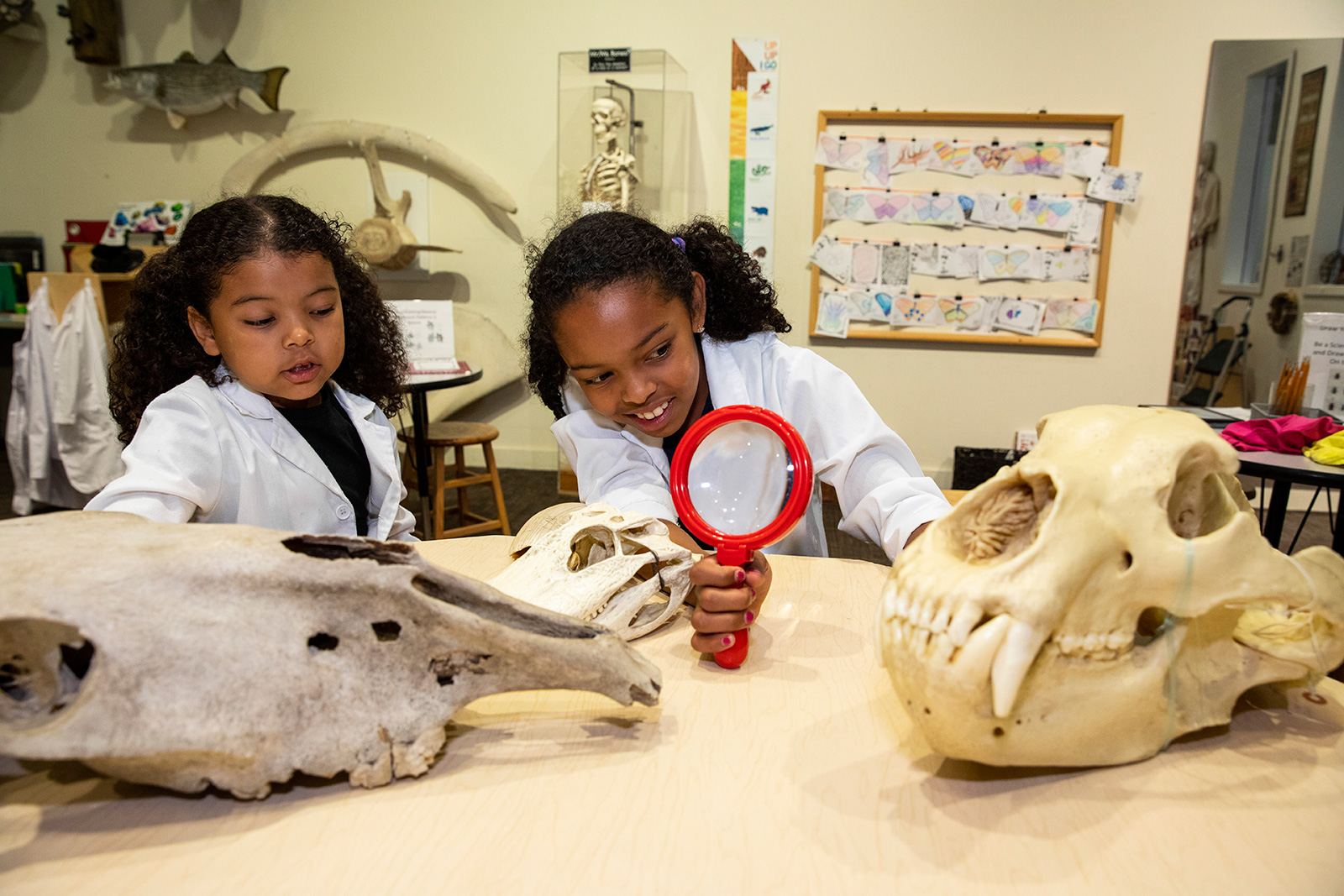 Two young girls in white lab coats use a hand lens to examine models of fossils at a table in Q?rius jr. – a discovery room.