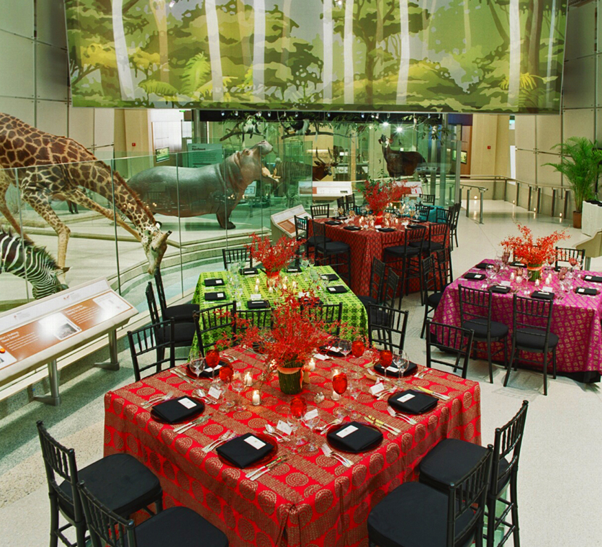 NMNH Mammals Hall transformed for an event