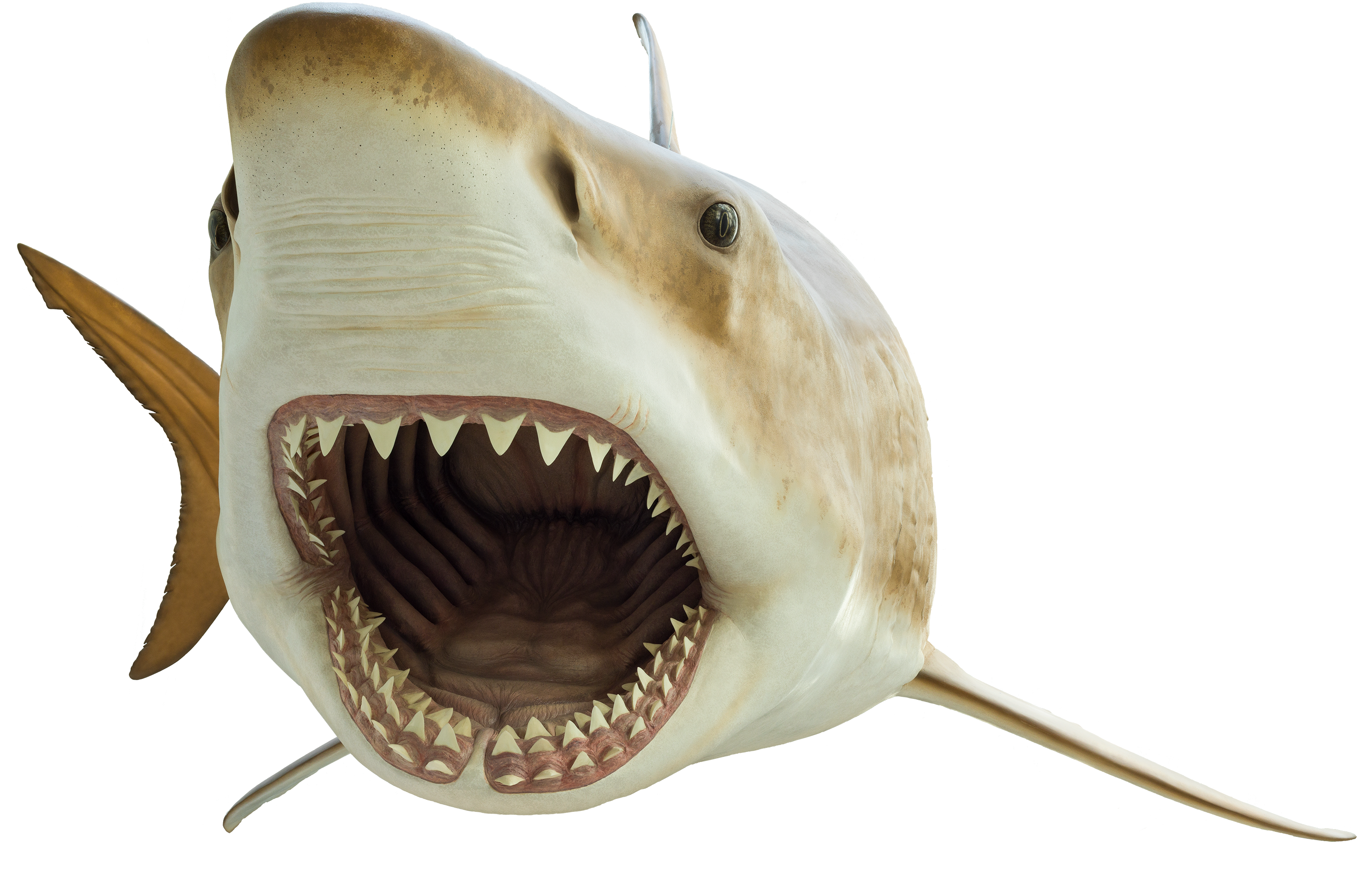 a cutout of a megalodon shark