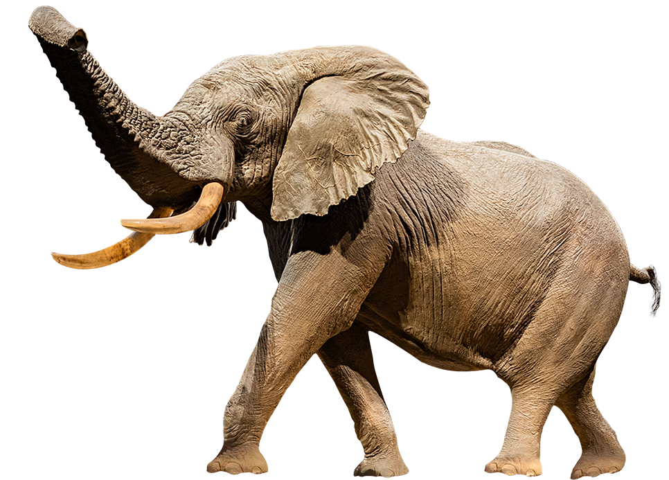A cutout image of Henry the taxidermy elephant.