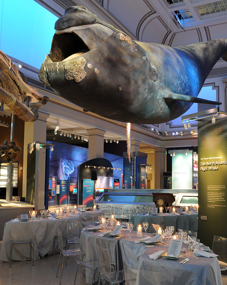 NMNH Ocean Hall transformed for an event