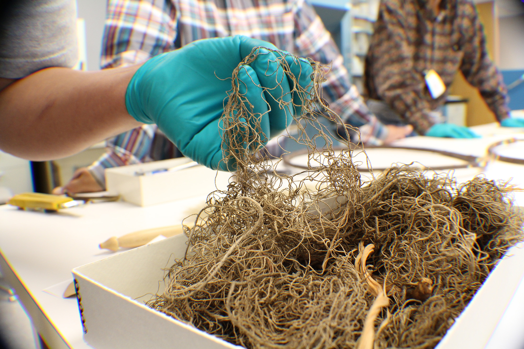 Wanapum researchers examine netting in collections