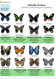 Butterfly Pavilion | Smithsonian National Museum of ...